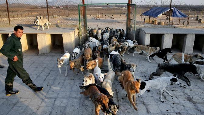 کمپ ویژه نگهداری سگهای بدون صاحب در بوشهر راهاندازی شد