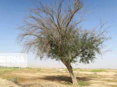 روستای 'گزدراز' محل زندگی فایز اسطوره دوبیتی سرای جنوب ایران
