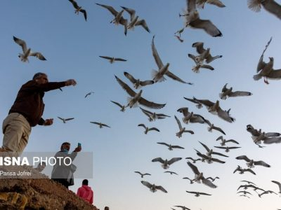 ساحل بندر بوشهر