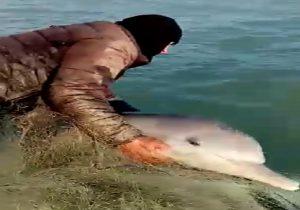 ماجرای دلفین گرفتار شده در تور صیاد تنگستانی