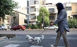 """""""سگ گردانی"""" در خیابان های بوشهر با خودروهای لوکس"""