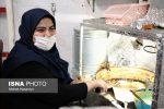قصه دختری که از حلوای انگشتپیچ و پکورا پول میسازد